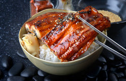 Japanese eel grilled with rice or Unagi don. Japanese eel grilled with rice or Unagi don set on plate in Japanese style with studio lighting royalty free stock images
