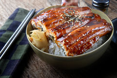Japanese eel grilled with rice or Unagi don. Japanese eel grilled with rice or Unagi don set on plate in Japanese style with studio lighting royalty free stock photos