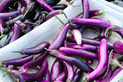Japanese Eggplant Stock Photos