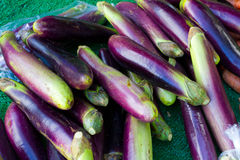 Japanese Eggplant Royalty Free Stock Photography