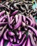 Japanese eggplant Stock Photography