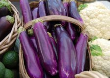 Japanese Eggplants Stock Images