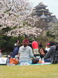 Japanese enjoying Cherry blossoms festival in park Stock Images