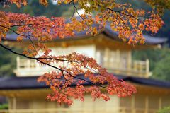 Japanese fall colors Royalty Free Stock Images