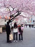 Japanese family enjoying cherry blossoms Royalty Free Stock Photography