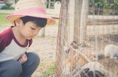 Japanese farm boy feeding farm rabbit bunny. Stock Images