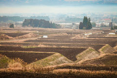 Japanese Farm Field in a Misty day Stock Photos