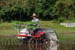 Japanese Farmer Planting A Rice Field By Tractor Stock Photo