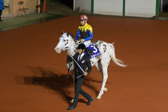 Japanese filly Buchiko at Funabashi Racecourse in Japan Stock Image
