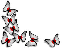 Japanese flag butterflies on white background Stock Photos