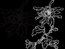 Japanese flower Stock Image