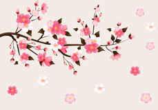 Japanese flowering cherry Stock Photo