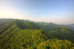 Japanese forest. View from the mountain Hakkenzan in Hokkaido Stock Image