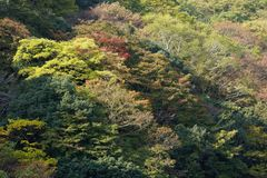 Japanese forest Stock Image