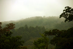 The japanese forest. Mist and trees in a cloudy day in Japan Royalty Free Stock Photo