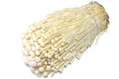 Japanese fresh enoki mushroom in white #3 Stock Photos