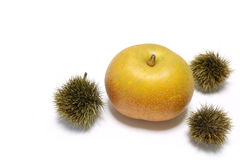 Japanese fresh pear fruit with chestnut Stock Images