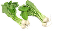 Japanese fresh turnip in the white #2 Royalty Free Stock Images