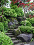 Japanese Garden. With stairs and red maple tree stock images