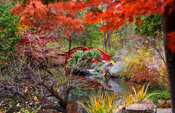 Japanese garden. Beautiful Japanese garden in bright autumn colors Stock Images