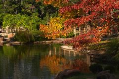 Japanese Garden. Fort Worth Texas Japanese Garden Stock Image