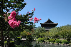 Japanese garden. Pagoda, pond, blossoming tree Royalty Free Stock Images