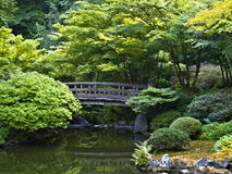 Japanese garden. Japanese Wood Bridge in garden of green trees Stock Images