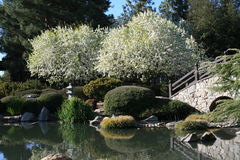 Japanese Garden. Sunny day in a beautiful Japanese Garden Royalty Free Stock Image