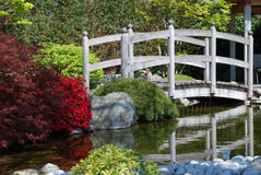 Japanese garden. With water, a bridge and a red bush stock images