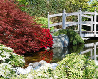Japanese garden. A bridge, a pond and some bushes in a beautiful japanese garden stock photography