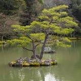 Japanese garden royalty free stock photos
