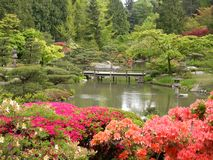 Japanese Garden. With beautiful flowers in foreground, bridge and pond and trees stock images