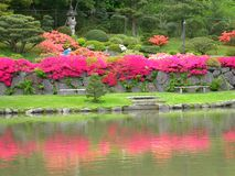 Japanese garden. A colorful image of a pristine Japanese garden royalty free stock image