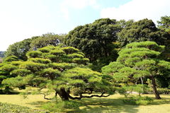 The Japanese Garden Royalty Free Stock Images