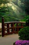 Japanese Garden. With sun beams streaming through dense foliage Stock Photography
