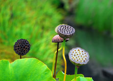 Japanese Garden. Picture of some plants in a Japanese Garden Stock Photography
