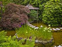 Japanese garden. Tradiitional design of a japanese garden with water, stones and plants Royalty Free Stock Image