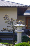 Japanese garden. Amur maple tree and stone lantern at the entrance to a Japanese house Royalty Free Stock Photo