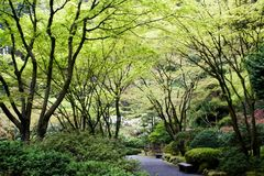 Japanese Garden. In early spring Royalty Free Stock Image