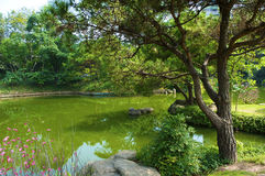 The Japanese garden. In the Chinese park, Shenzhen Royalty Free Stock Images