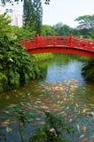 The Japanese garden) Stock Image