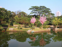 Japanese Garden. At Shenzhen city on China Royalty Free Stock Images
