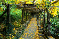 Japanese Garden Arbor. Beautiful fall tunnel royalty free stock images