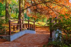 Japanese garden in Arboretum, Sochi, Russia. Japanese garden with bridge in Arboretum in sunny autumn day, Sochi, Russia Royalty Free Stock Photography