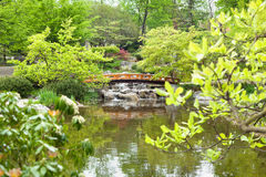 Japanese garden. With arched bridge and waterfall Stock Photography