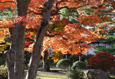 A Japanese Garden in Autumn Royalty Free Stock Photo
