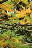 Japanese garden in Autumn Stock Photos