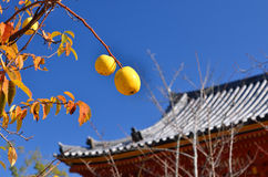 Japanese garden in Autumn, Kyoto Japan. Stock Photo