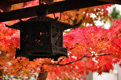 Japanese garden in Autumn, red leaves. Kyoto Japan. Red maple leaves and lantern in Japanese garden of a shrine in Kyoto stock photo