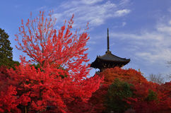 Colors of autumn, red leaves and pagoda, Japan. Royalty Free Stock Image